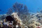895_Tomia-07_Reef_P8110040_P1018561.jpg