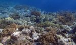 912_Tomia-06_Reef-top_P8130155_P1018675.jpg
