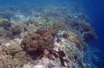 915_Tomia-06_Reef-edge_P8130156_P1018676.jpg