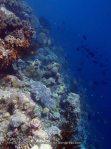 916_Tomia-06_Reef-edge_P8130179_P1018699.jpg