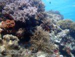 929_Tomia-06_Reef_P8130222_P1018743.jpg