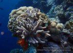 931_Tomia-06_WDR-Reef_P8130248_P1018769.jpg