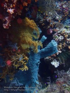 934_Tomia-06_Colourful-Sponges_P8130296_P1018818.jpg