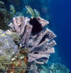 935_Tomia-06_Colourful-Sponges_P8130165_P1018685.jpg