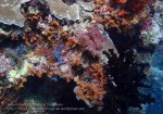 937_Tomia-06_Colourful-Sponges_P8130276_P1018798.jpg