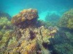 126_1d-More-Coral-Species_20150405_IMG_5497GT.jpg