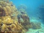 133_2a-Coral-n-Parrotfish_20150405_IMG_5513GT.jpg