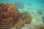 137_2b-Hump-Coral_20150405_IMG_5520GT.jpg