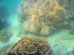 138_2b-Bracket-Coral_20150405_IMG_5523GT.jpg