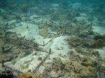 143_2bc-Coral-Seeding_20150405_IMG_5531.jpg