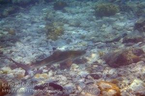 176_3-Shark_20150407_IMG_5899.jpg