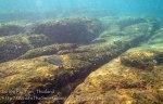 190_3-Lined-surgeonfish_20150402_IMG_4805.jpg