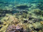 202_3-Coral_20150402_IMG_4803.jpg