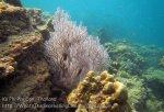 203_3-Soft-Coral_20150402_IMG_4811.jpg