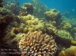 254_5-Mid-LMD-Corals_20150407_IMG_5930.jpg