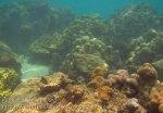 280_5-Corals_20150402_IMG_4865GT.jpg