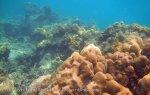 283_5-Corals_20150402_IMG_4868GT.jpg