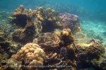 284_5-Corals_20150402_IMG_4869.jpg