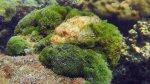 285_5-Scorpionfish_20150402_IMG_4872.jpg