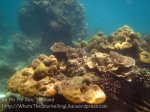 296_5-Corals_20150402_IMG_4881.jpg