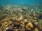 303_5-Toko-bay-Corals_20150402_IMG_4883.jpg