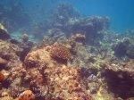 310_5-Rantii-Coral_20150402_IMG_4892GT.jpg