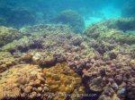 311_5-Rantii-Coral_20150402_IMG_4893.jpg