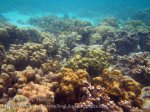 318_5-Corals-North-of-Rantii_20150402_IMG_4900.jpg
