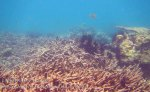 319_5-Corals-North-of-Rantii_20150402_IMG_4901GT.jpg