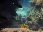 322_5-Moon-Wrasse-n-Bannerfish_20150402_IMG_4903.jpg