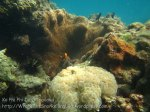 335_5-Jellybean-Coral-n-Clarkes-Nemo_20150402_IMG_4922.jpg