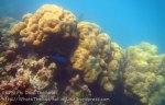 343_5-Haat-Pak-Naam-Corals_20150402_IMG_4941.jpg