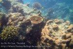344_5-Haat-PakNaam-Corals_20150402_IMG_4944.jpg