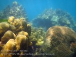 357_5-Corals-Nth-of-PakNaam_20150402_IMG_4951.jpg
