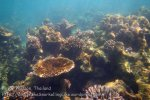 360_5-Corals-Nth-of-PakNaam_20150402_IMG_4953.jpg