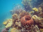 363_5-Corals-Nth-of-PakNaam_20150402_IMG_4955.jpg