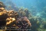 372_5-Coral-Nth-Paknaam_20150402_IMG_4958.jpg