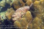 378_5-Scorpionfish_20150402_IMG_4984.jpg