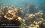 386_5-Corals_20150402_IMG_4966.jpg