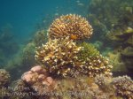 388_5-Corals_20150402_IMG_4973.jpg