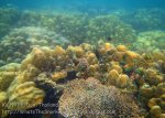 436_5-Coral_20150404_IMG_5212.jpg