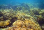 440_5-Coral_20150404_IMG_5222GT.jpg