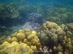 444_5-Coral_20150404_IMG_5224.jpg