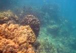 458_5-Coral-Nr-Natural-Rst_20150404_IMG_5242GT.jpg