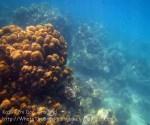 462_5-Coral_20150404_IMG_5245.jpg