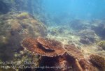 506_7-Rocks-n-Table-Coral_20150404_IMG_5266.jpg