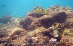 554_7-Ao-Noy-Skanky-Coral_20150404_IMG_5324.jpg