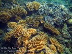 563_7g-Softcorals_20150404_IMG_5344.jpg