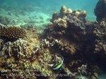 573_7h-Scraggy-Coral_20150404_IMG_5367.jpg