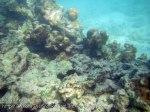 575_7hi-Scraggy-Coral_20150404_IMG_5369.jpg
